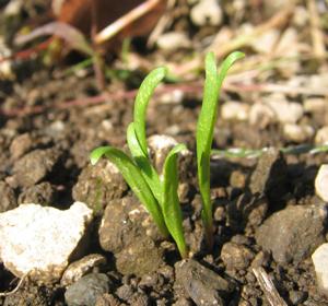 20061011_spinach.jpg